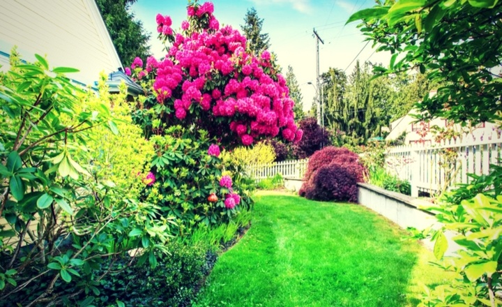 6-Ways-To-Maintain-Healthy-Landscape