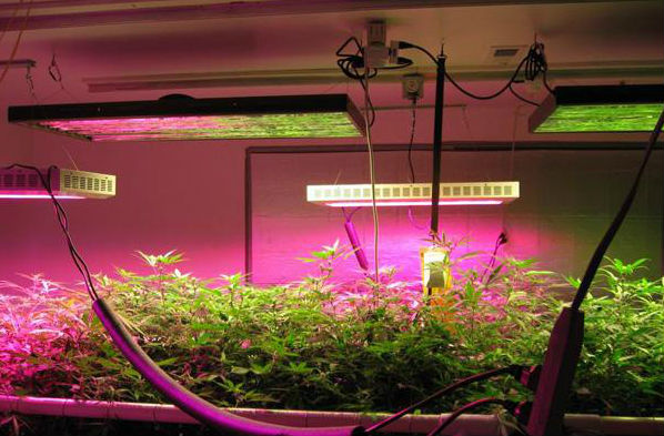 top-led-grow-ligths