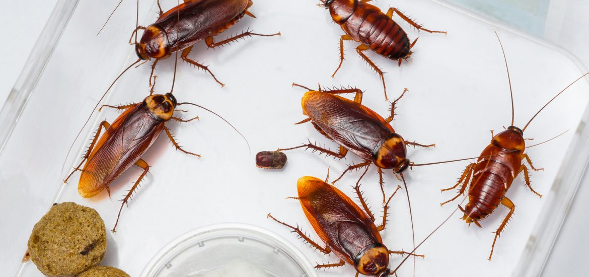 How To Get Rid Of Roaches In Kitchen Cabinets Dandk