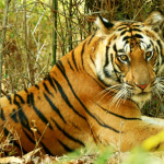 Important Things to Know Before Visiting Bandhavgarh
