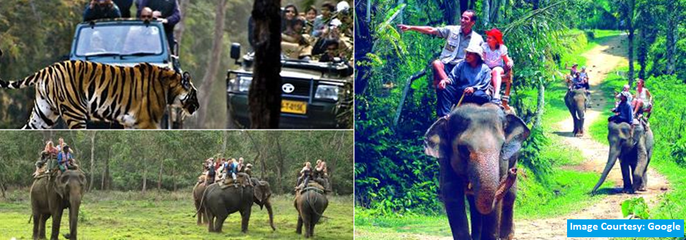 jungle-safari-in-bandhavgarh-lth-bandhavgarh