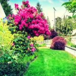 Green Landscaping Ideas For Your Lovely Yard