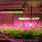 Do LED Grow Lights Work For Growing Plants?