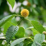 The Types of Kratom & Their Benefits