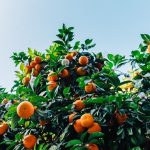 Prepare Your Fruit Garden For Spring