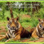 13 Most Intriguing Facts Related To Jim Corbett National Park