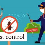 Be Saved From Bed Bugs By Bed Bugs Pest Control