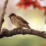 4 Things To Consider When Adopting a Bird
