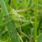 Tips to Care Your Home and Garden from Insects
