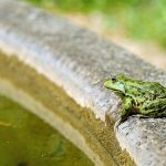 How to Get Rid of Frogs From Garden?