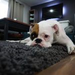 4 Benefits of Chem-Dry Carpet Cleaning