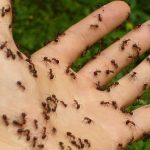 How Do I Get Rid of Ants at Home?