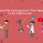 General Pet Emergencies That Need To Be Addressed